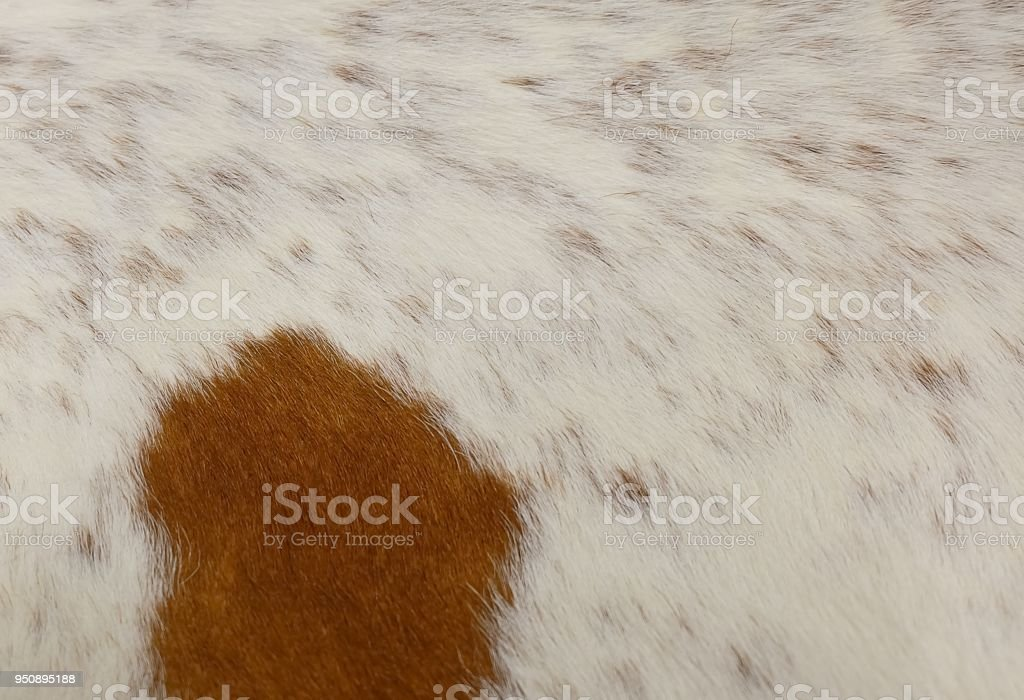 Detail of A Skin of A Cow Texture Background stock photo
