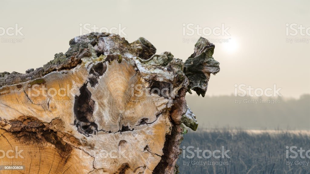 Detail of a tree trunk with a bark on the edge stock photo