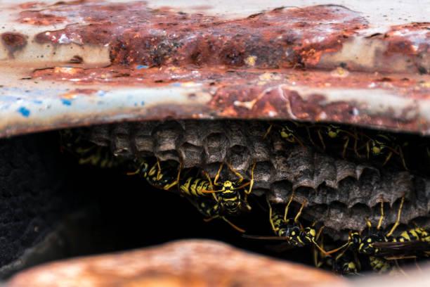 detail einer wespen-nest - eierstich stock-fotos und bilder