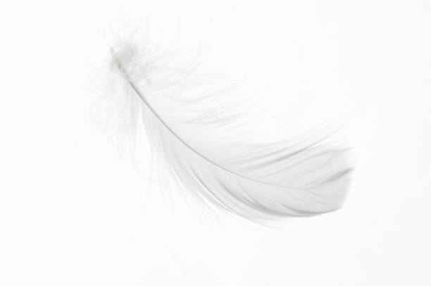 Detail of a white feather White feather isolated on white background feather stock pictures, royalty-free photos & images