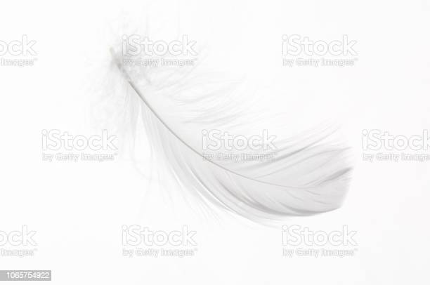 Photo of Detail of a white feather