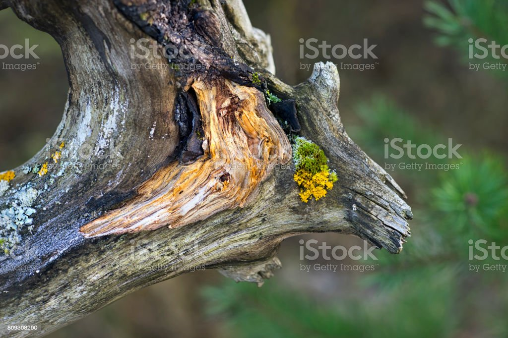 Detail of an old tree in the forest stock photo