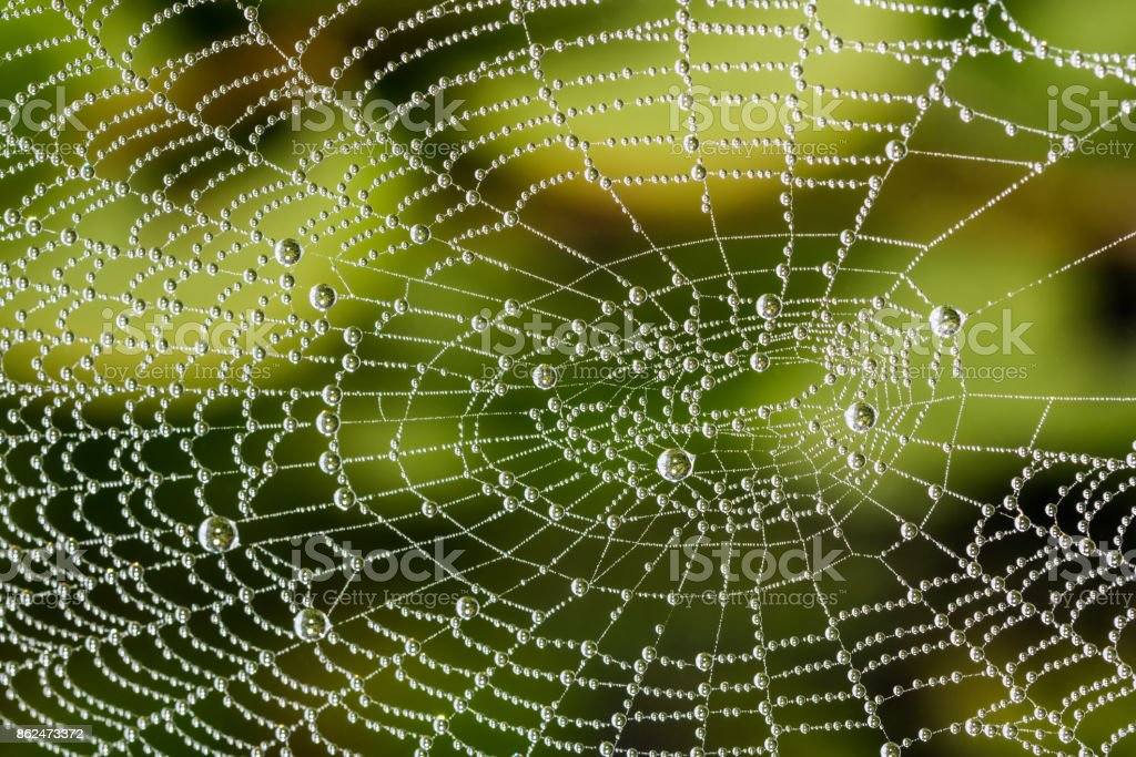Detail of beautiful cobweb with pearls from dew drops on green blurred background stock photo