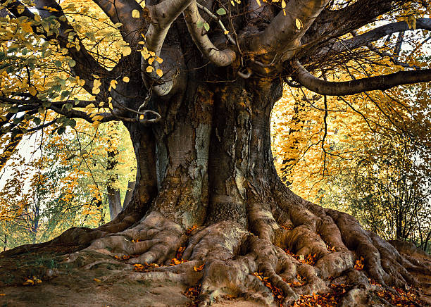 Detail of beautiful old tree in a park stock photo