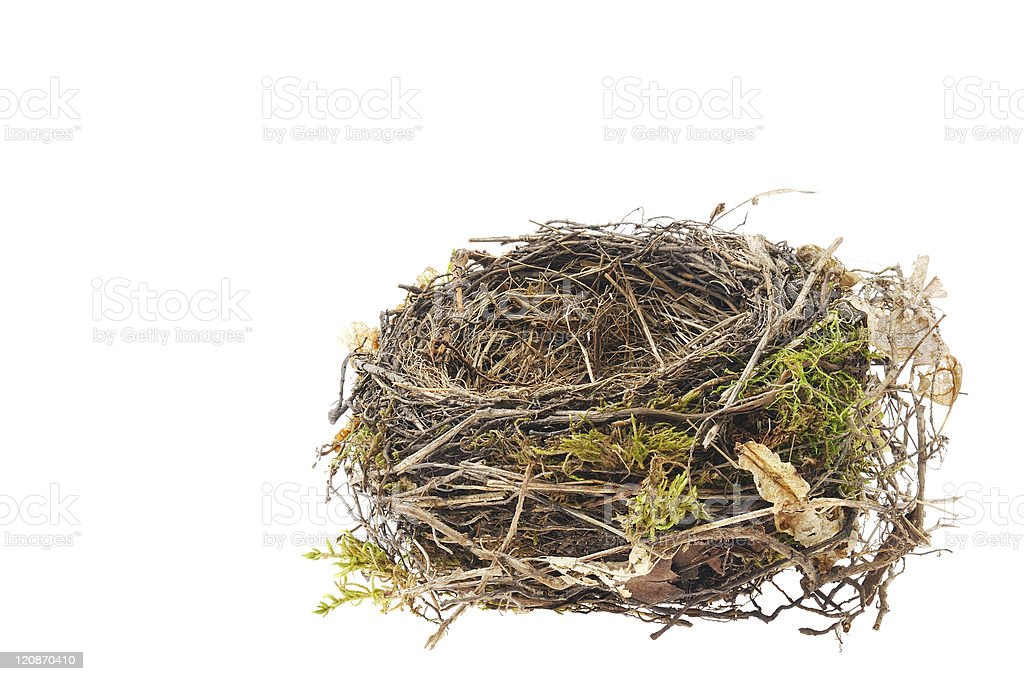 Detail of blackbird nest isolated on white stock photo