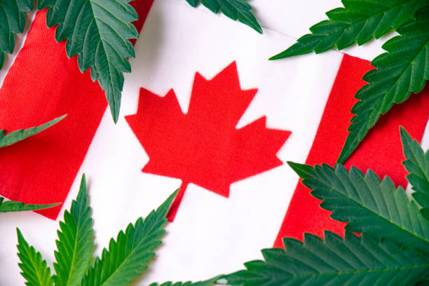 Detail of canadian flag with cannabis leaves stock photo