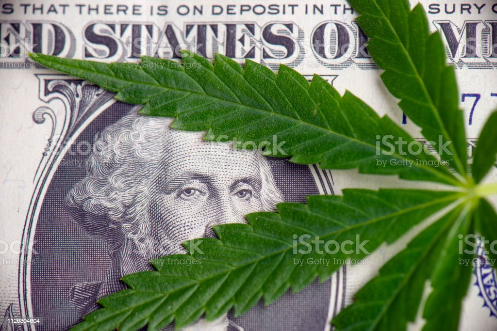 Detail of cannabis leaf over american dollar bill Detail of cannabis leaf over american dollar bill - medical marijuana stock market concept Accountancy Stock Photo
