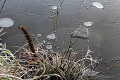 Detail of clear ice on pond with frost grass