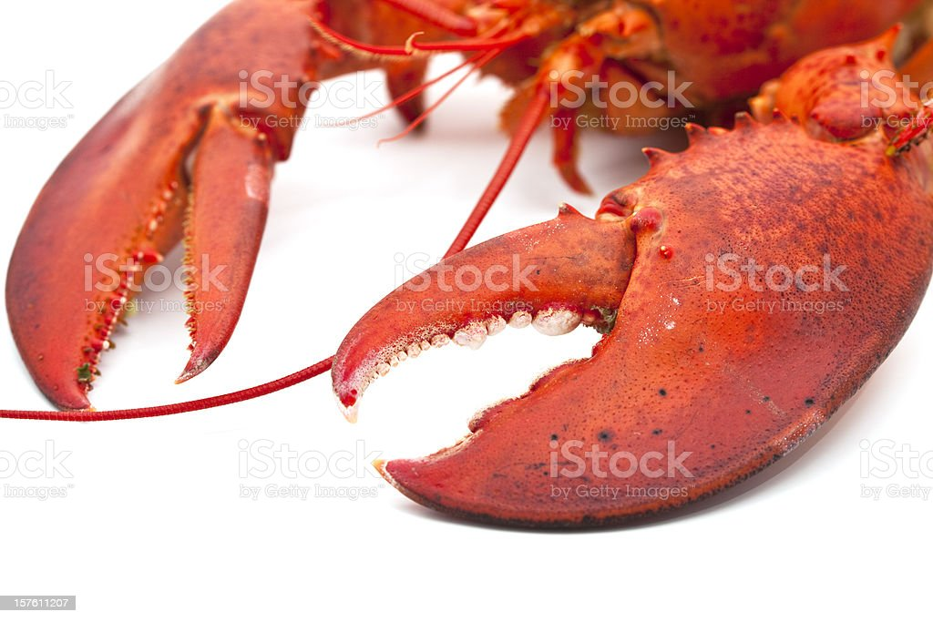 Detail of cooked lobster's claws on a white background royalty-free stock photo