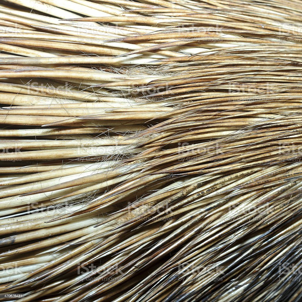 detail of crested porcupine fur royalty-free stock photo