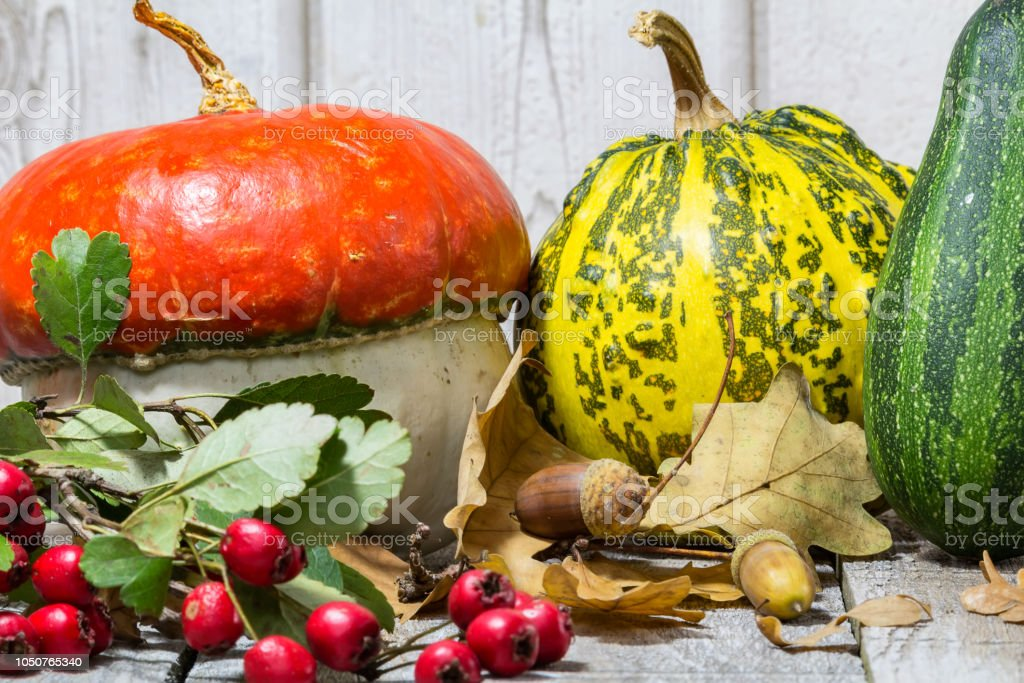 Detail of decorative pumpkin with acorn, brier on wood background stock photo