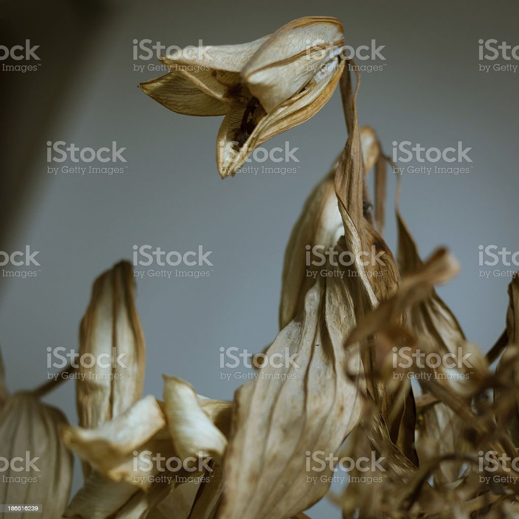Detail of dried flowers royalty-free stock photo