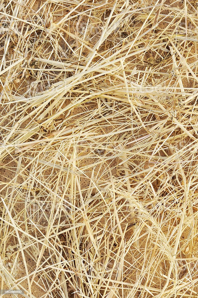 Detail of dry grass hay background royalty-free stock photo