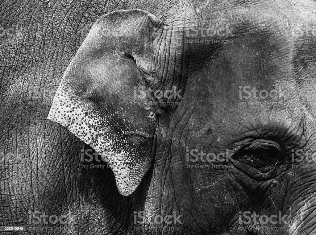 Detail of Elephant - Monochrome stock photo