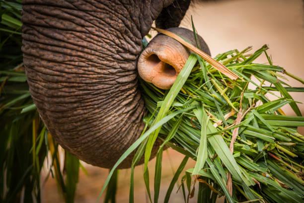 Detail of Elephant stock photo