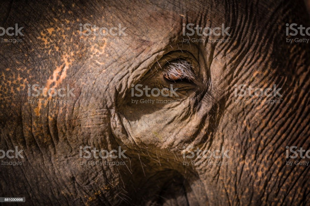 Detail of Elephant stock photo