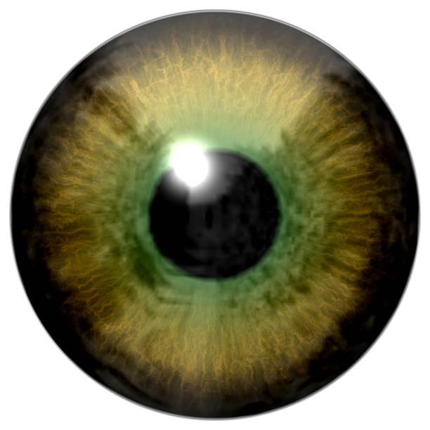 detail des auge iris und grün farbe und schwarz schüler - illustration optician stock-fotos und bilder