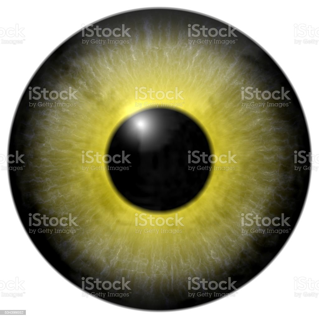 Detail of eye with olive green colored iris and pupil stock photo