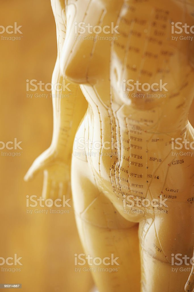 Detail of female acupuncture model stock photo