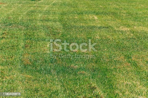 detail of field full of freshly cut green grass in sunny day