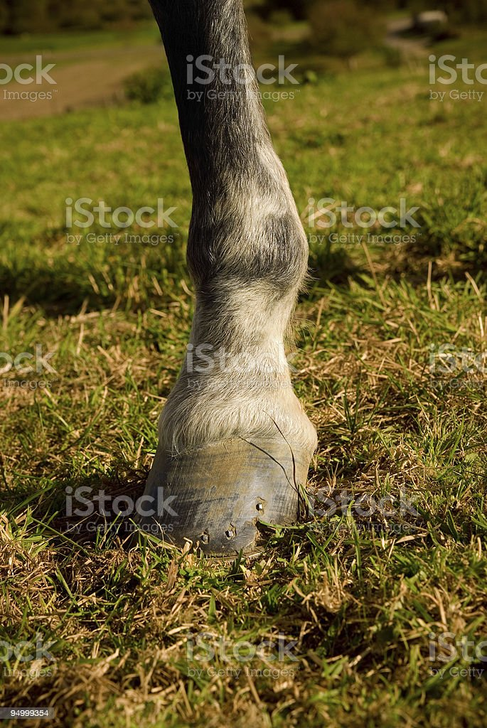 detail of horse hoof royalty-free stock photo