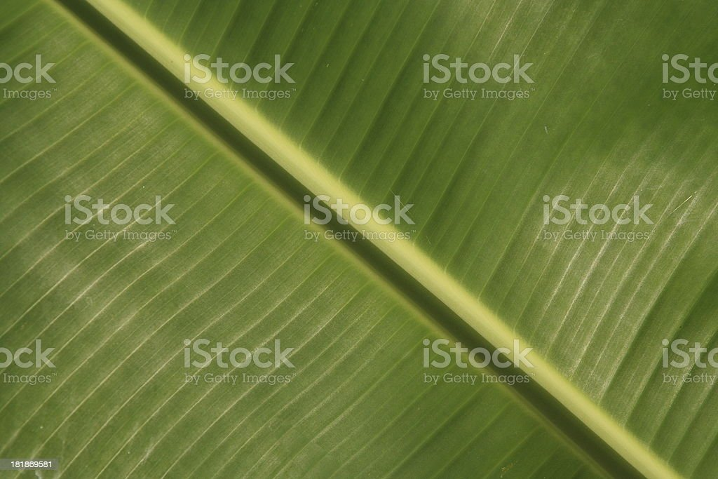 Detail of leaf stock photo