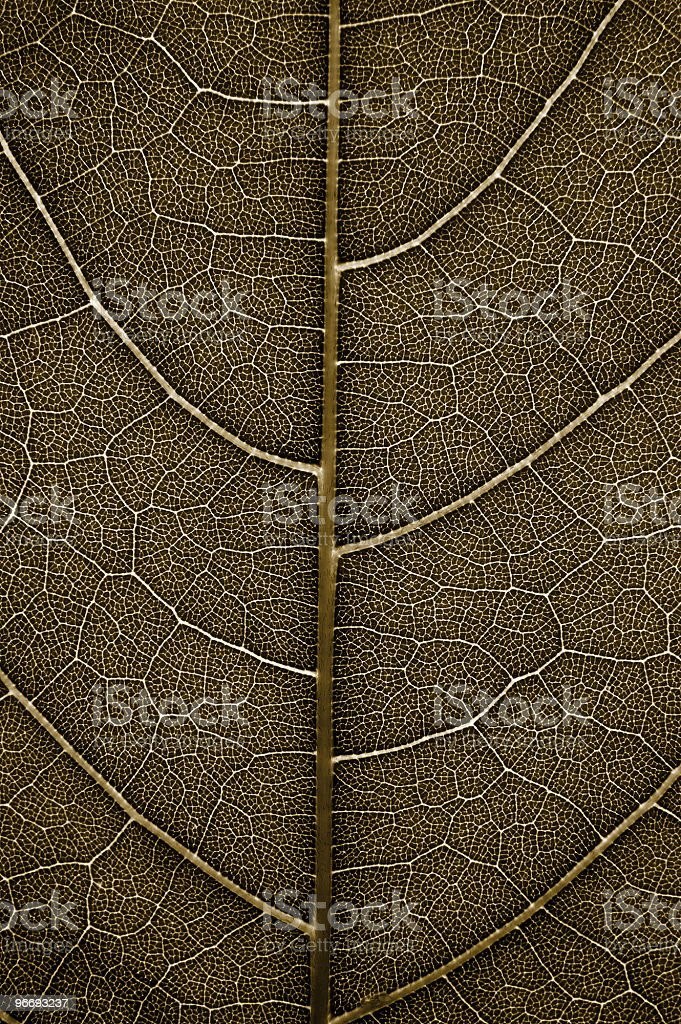Detail of leaf veins royalty-free stock photo