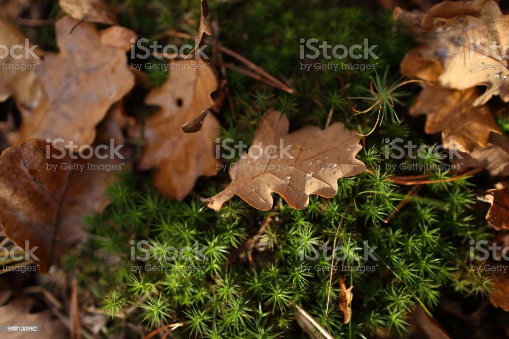 Detalj av bladen på hösten - Royaltyfri Beskrivande färg Bildbanksbilder