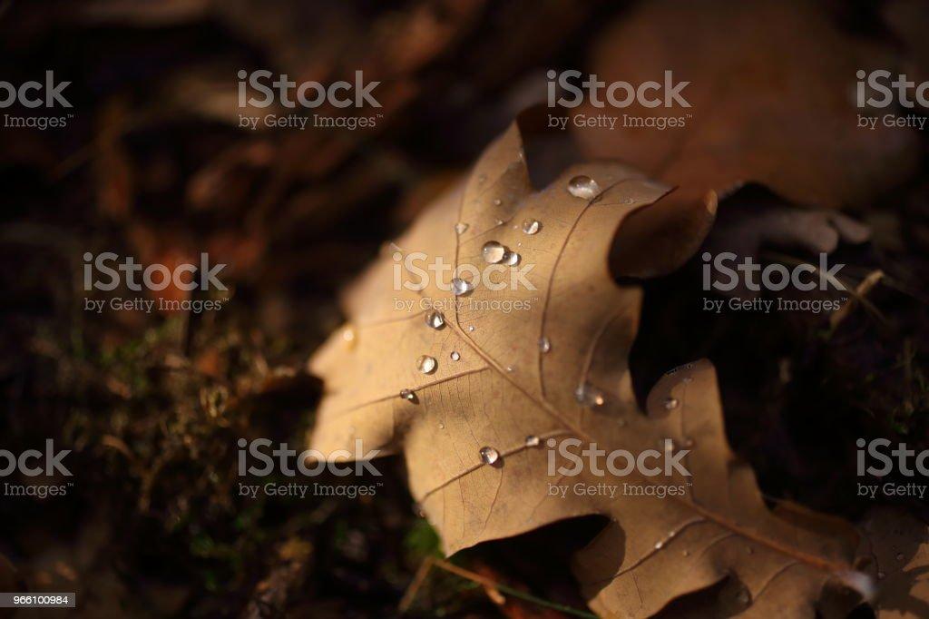Detalj av bladen på hösten - Royaltyfri Blad Bildbanksbilder