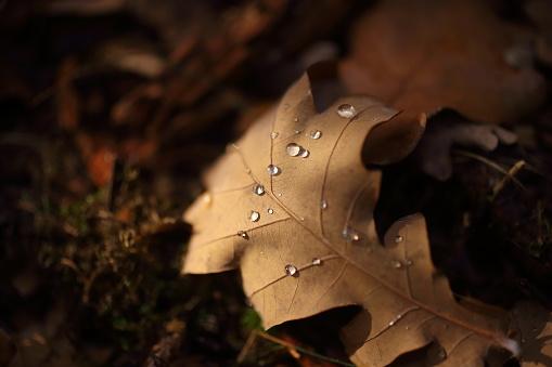 Detalj Av Bladen På Hösten-foton och fler bilder på Blad