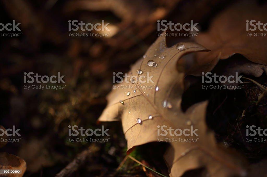 Detail of leaves in autumn - Стоковые фото Без людей роялти-фри