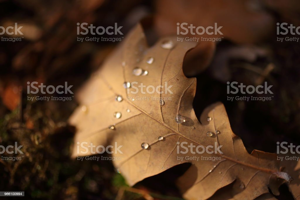 Detail of leaves in autumn - Royalty-free Amarelo Foto de stock