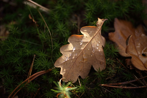 Detail Of Leaves In Autumn Stock Photo - Download Image Now