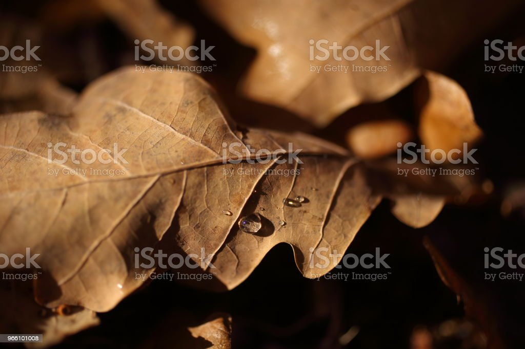 Detail of leaves in autumn - Royalty-free Autumn Stock Photo