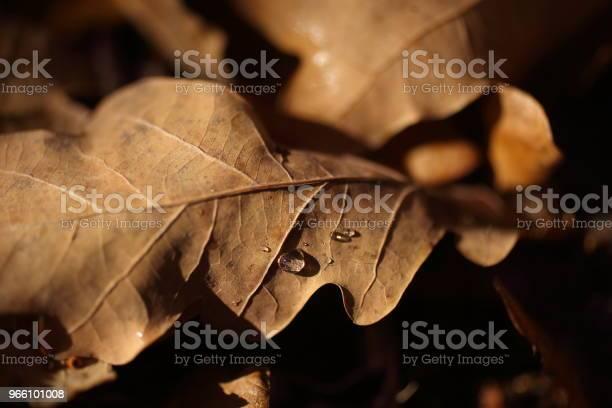Detalj Av Bladen På Hösten-foton och fler bilder på Brun - Beskrivande färg