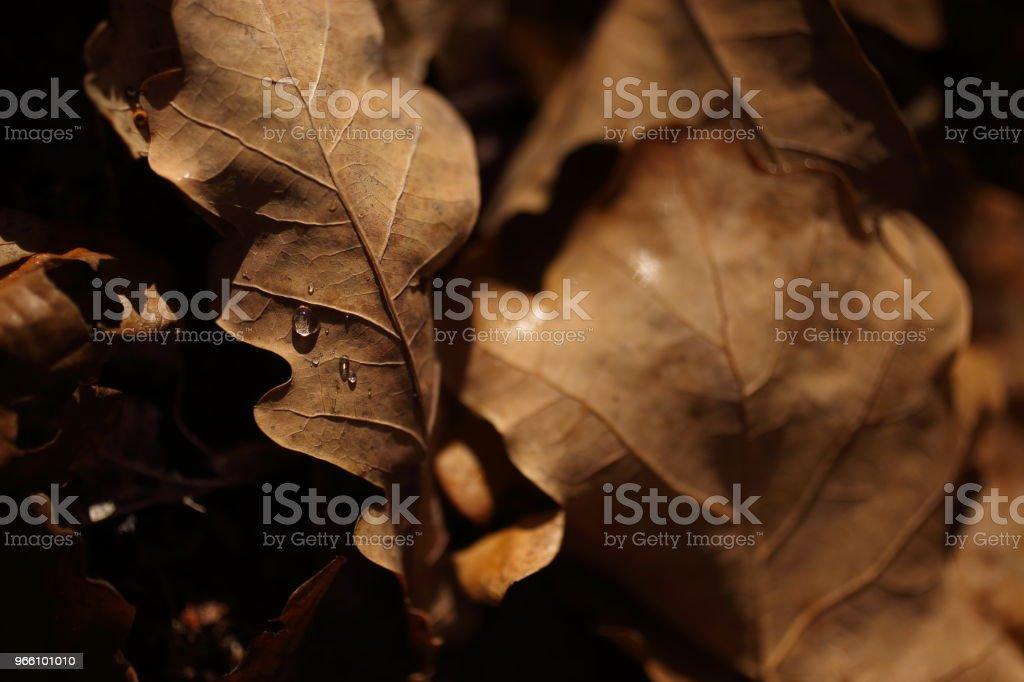 Detalj av bladen på hösten - Royaltyfri Forntida Bildbanksbilder