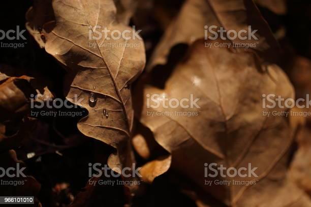 Detalj Av Bladen På Hösten-foton och fler bilder på Forntida