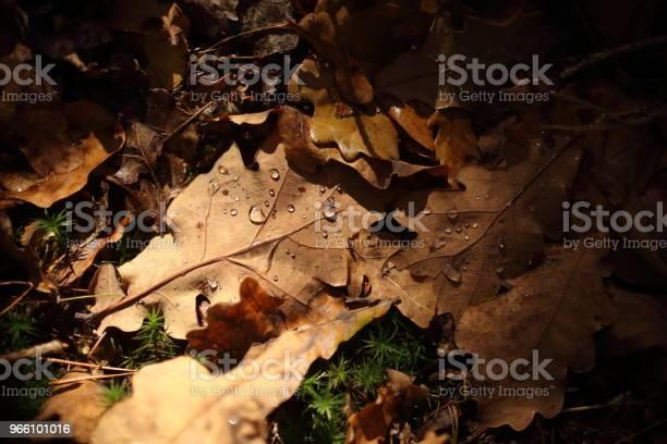 Деталь Листьев Осенью — стоковые фотографии и другие картинки Без людей