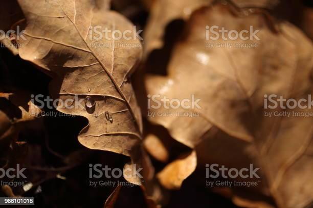 Detalj Av Bladen På Hösten-foton och fler bilder på Fotografi - Bild