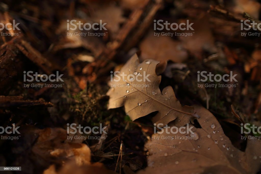 Detail of leaves in autumn - Royalty-free Arthropod Stock Photo