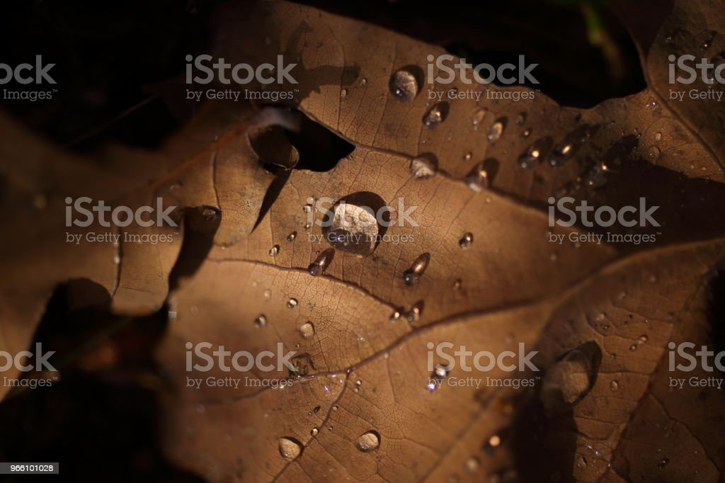 Detail of leaves in autumn - Royalty-free Aging Process Stock Photo