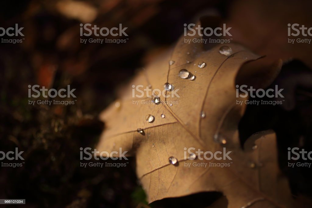 Detail der Blätter im Herbst - Lizenzfrei Alt Stock-Foto
