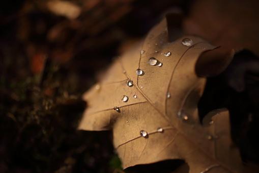 Detalj Av Bladen På Hösten-foton och fler bilder på Beskrivande färg