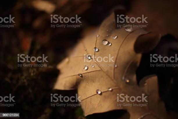 Detail Der Blätter Im Herbst Stockfoto und mehr Bilder von Alt