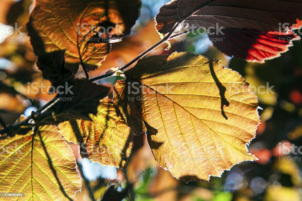 detail of leaves in harmonic colors royalty-free stock photo
