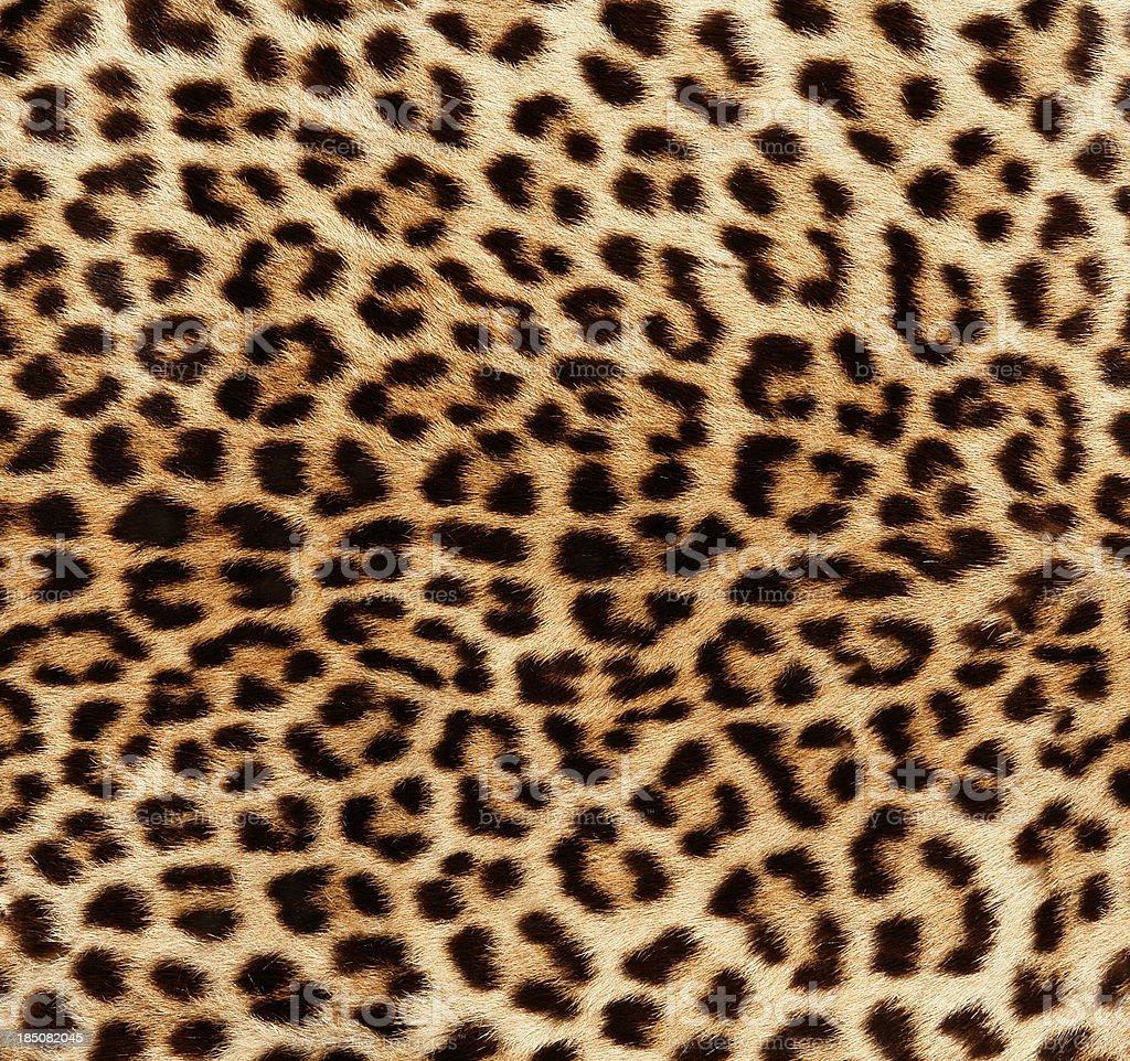 Detail of Leopard Skin stock photo