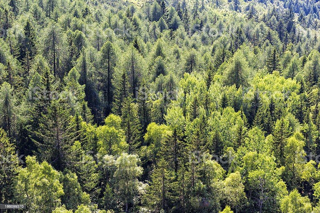 Detail der Mountain Bäume auf den italienischen Alpen im Sommer - Lizenzfrei Ansicht von oben Stock-Foto
