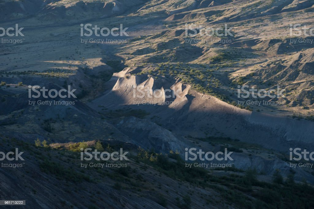 Detail of new life in the blast zone of Mount St Helens volcano, Washington stock photo