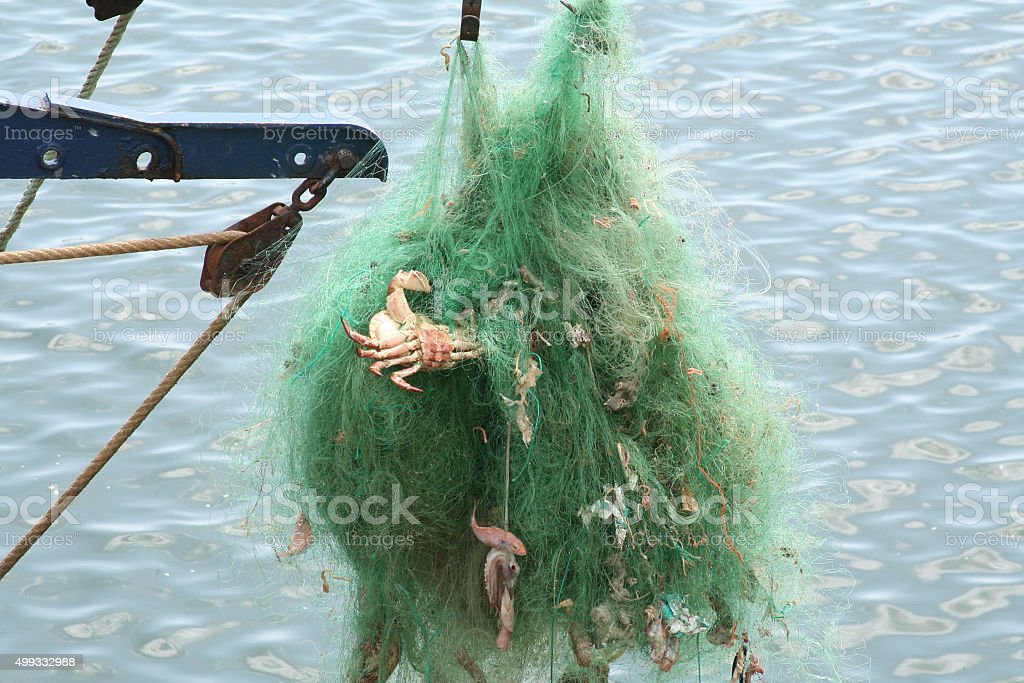Detail of tangled green fishing nets with crabs, fish stock photo