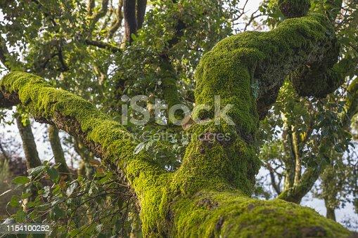 Vegetation in Buçaco National Forest, Portugal